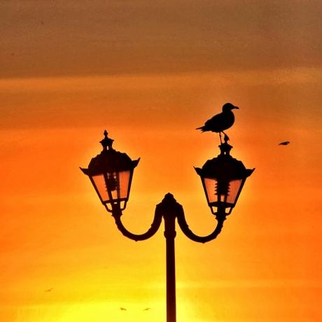 Gabbiano al tramonto